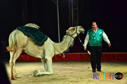 DSC_0245italian circus