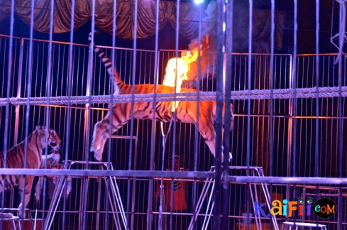 DSC_0339italian circus