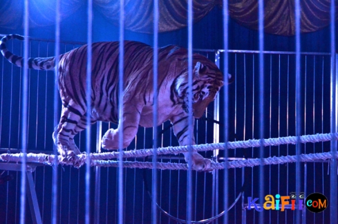 DSC_0348italian circus