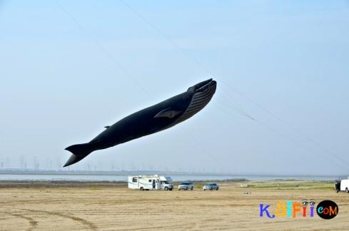 DSC_0494guiness world record kite